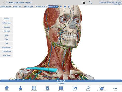 3d атлас анатомии человека на русском скачать бесплатно