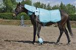 ветеринарная установка для магнитотерапии / для домашних животных / для лошади / для верблюдов