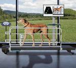 система анализа походка / ветеринарная